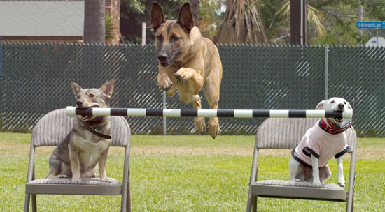 Trained dogs